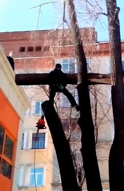 Спил деревьев промышленными альпинистами - арбористика в СПб