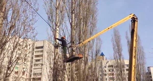 Опиловка деревьев в СПб