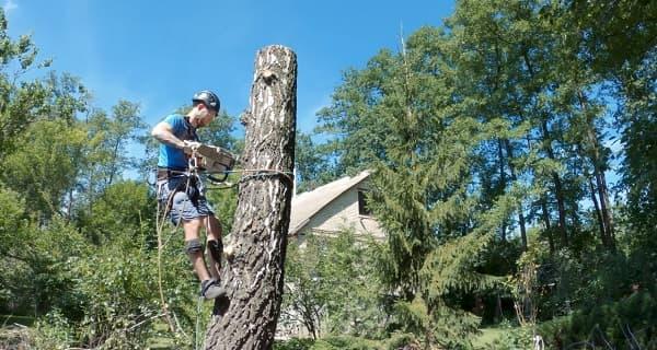 Валка деревьев частями в СПб